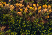 Shadows a falling in a autumn colored forest, drone shot straight from above.