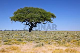 Landschaft im Etosha-Nationalpark, Namibia   Landscape at Etosha National Park, Namibia