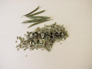 Getrocknete und geschnittene Olivenblätter vom Olivenbaum für Olivenblättertee