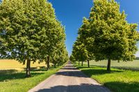Scenic straight avenue with lush green trees in summer in rural landscape