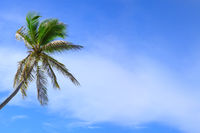 Palm tree isolated on blue sky background.