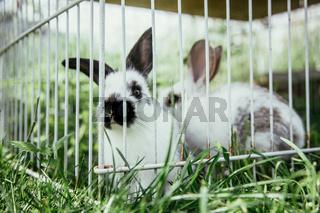 Cute little bunnies in an outdoor compound, green grass, summertime
