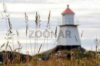 Leuchtturm hinter Wiesengras