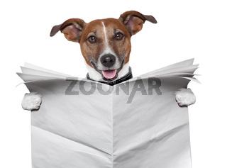 dog blank newspaper