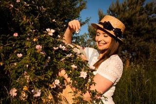 Picking wild rose petals for aromatic herbal tea