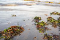 Green and red seaweed were thrown onto the beach by the waves close up
