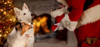 zwei Hunde sitzten erwartungsvoll vor Weihnachtsmann