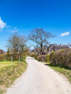 Weg mit Bäumen und Häusern in Ahrenshoop auf dem Fischland-Darß