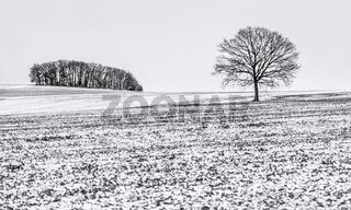 Winterliche Feldlandschaft