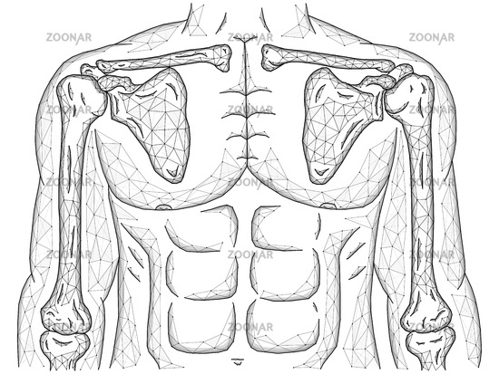 Polygonal vector illustration of shoulder and elbow joints, human body model made from line and dots, front view.