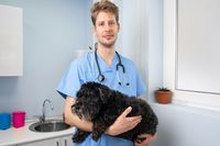 Young male veterinarian doctor with stethoscope holding and examining cute dog at veterinary clinic. Pet health care and medical concept.