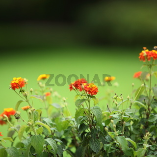 Colourful orange flowers