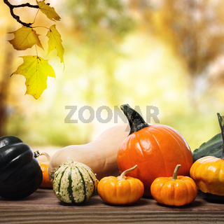 Pumpkins and squashes with a shinning fall background