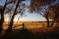 Australian Country Road at Sunset near Bendigo
