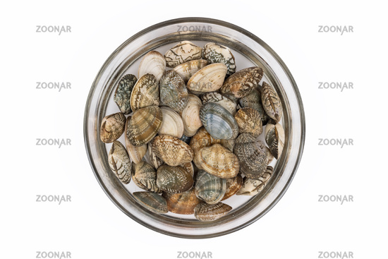 short necked clam in a glass bowl with water