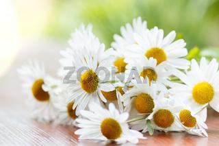 daisy flower with shallow focus