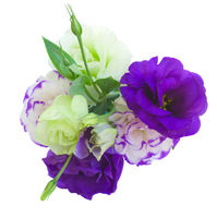 Eustoma bouquet