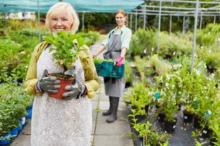Gärtnerei Team bei der Blumen und Pflanzenpflege