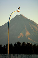Mt. Taranaki with street light