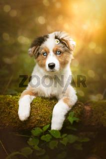 Hundewelpe sitzt auf einem Baumstamm mit einem Gänsblümchen am Ohr