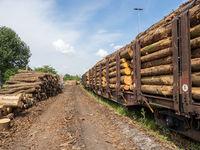 Stapel von Baumstämmen auf und neben Eisenbahn-Wagons auf einem Rangierbahnhof