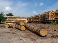 Stored timber in the area of a railway switch yard