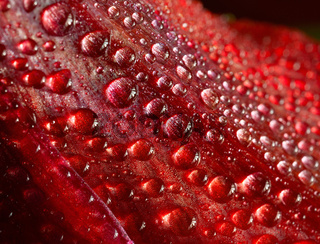 drops on a red