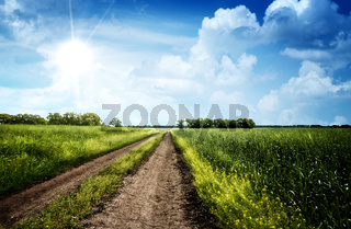 Summer day on the meadow, rural landscape