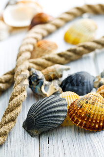 sea shells and rope