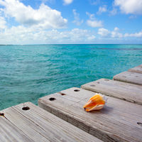 Seashell on wooden background and caribbean sea.