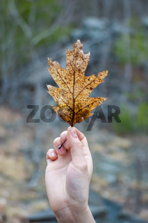 Close ups of nature's leaves and vegetation