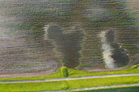 Water standing on flooded field with plants growing in lines from directly above