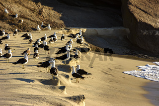 Seagulls resting on the sand at Devil beach