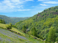 bluebells flowering in a meadow above the calder valley in west yorkshire with panoramic scenic view of the woodland around hardcastle crags