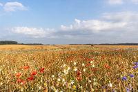 blühende Felder und landschaften