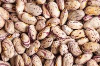 Dried cranberry beans. Borlotti beans.