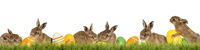 Six little Easter bunnies with Easter eggs on a green meadow isolated on a white background