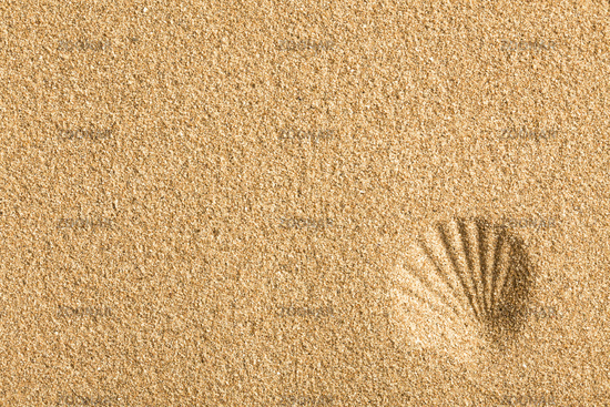 shell imprinted on the sand