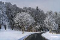 Die Strasse durch den Winterwald