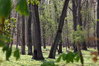 Wald 1.jpg