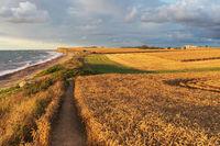 Weizenfelder mit Wanderweg im Abendlicht an der Ostsee