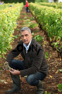 Farmer kneeling in vineyard