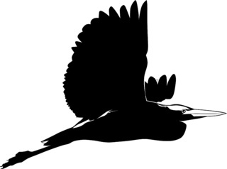 Black and white image of a flying heron