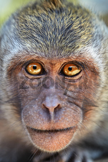 Portrait of curious monkey
