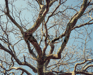 Detail of tree in winter