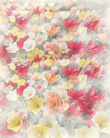 Colorful tulip flowers watercolor. Digital illustration.