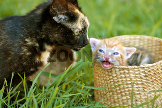 Mother cat and kitty