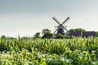 Windmühle Seriemer Mühle in ländlicher Umgebung, Ostfriesland, Niedersachsen, Deutschland