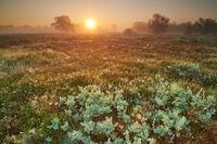 Neustaedter Moor bei Sonnenaufgang
