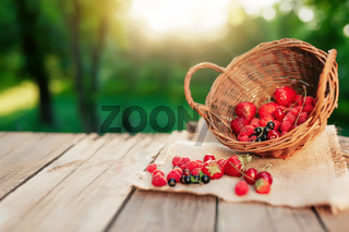 Overturned basket with various berries on a wooden terrace in the morning sun